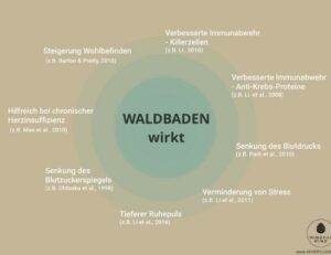 Blogbeitrag Waldbaden